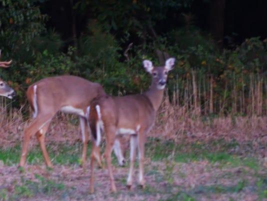 1-LDN-SUB-011716-deer-herd.jpg