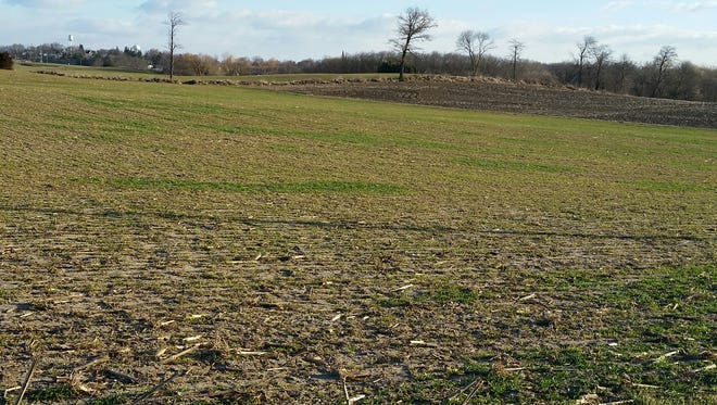 Now is a good time to scout your fields and assess the quality of your wheat stand.