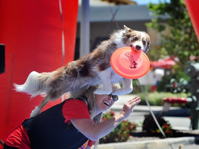 JOSEPH A. GARCIA/THE STAR Jaeleen Sattler, of Whittier, gets her border collie, Sprint, to grab a disc Saturday while leaping off her back during a set of performance tricks Saturday as part of the grand opening of Pet Food Express at The Collection.