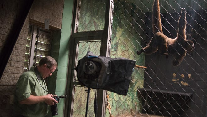 National Geographic photographer Joel Sartore photographs the last two remaining woolly monkeys in North America in the Louisville Zoo for his project the Photo Ark. June 23, 2014.