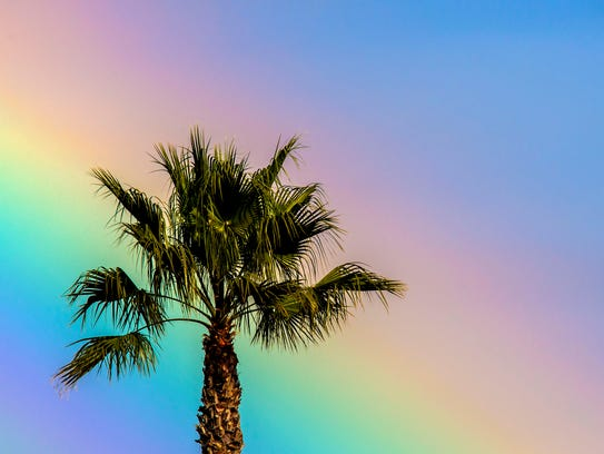 A rainbow casts its glow behind a palm tree near the
