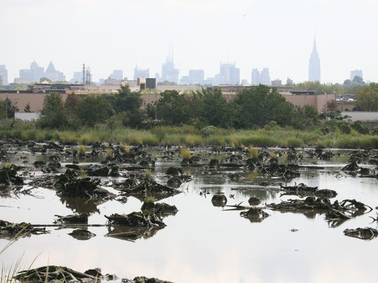 Atlantic cedar stumps in Mill Creek Marsh in Secaucus, with the Empire State Building in the distance.
