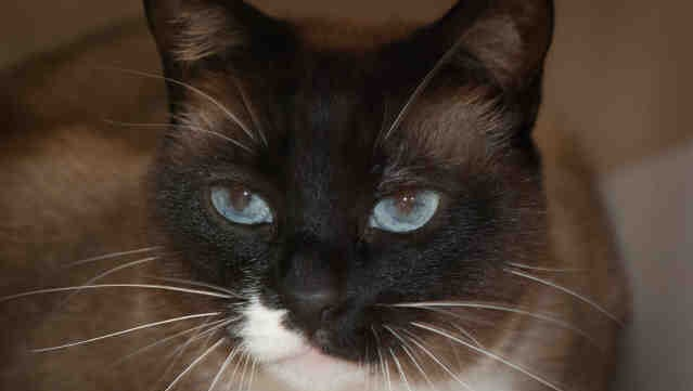 Bell is available for adoption at the Humane Society of Ventura County in Ojai.