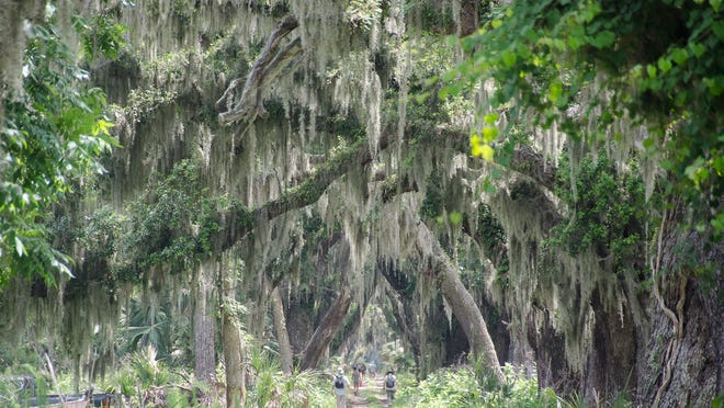 A group walks toward the interior of Ossabaw Island, a state Heritage Preserve.