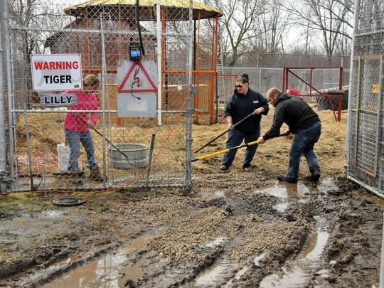 Volunteers spread gravel and level the entrance of the tiger enclosures Saturday at Tiger Ridge Exotics in Stony Ridge.