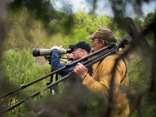 NJ Audubon holds its annual World Series of Birding on Saturday May 06, 2017