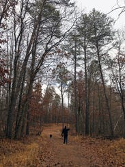 An old logging road serves as a trail in Quincy Bluff