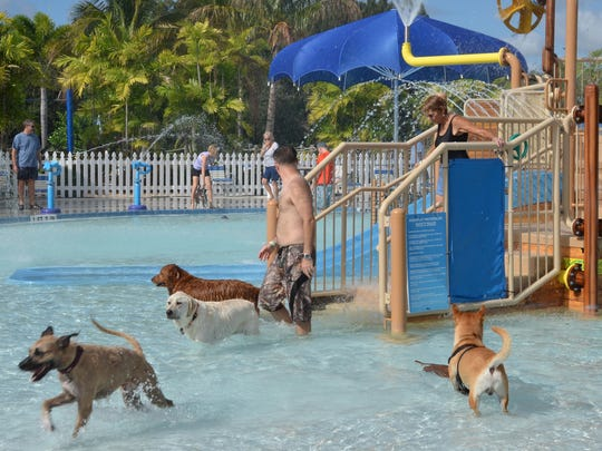 Dogs love the opportunity to run free at Sailfish Splash Waterpark during the Humane Society of the Treasure Coast's Santa Paws Pooch Plunge.