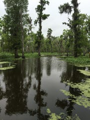 A view from a kayak touring Manchac Swamp by Nicholas Solnick of Wild LA Tours.