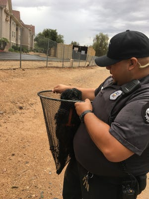 Peoria Animal Control Officer Sam Corral holds Duncan the dog, who was saved from a rapidly filling canal Aug. 5, 2016, in Peoria.
