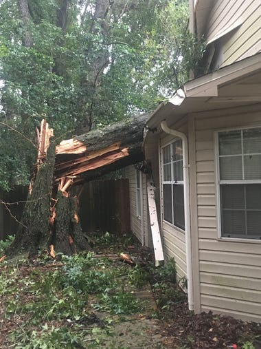 Oak tree that fell through the middle of my parents