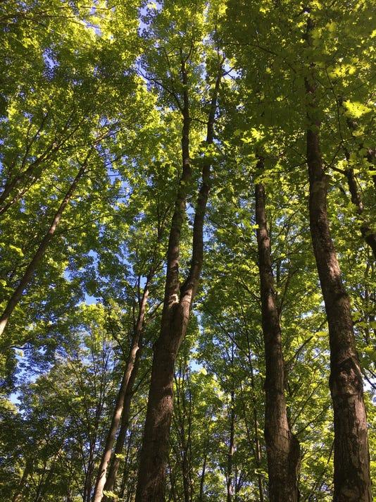 636101383858998799-Trees.jpg