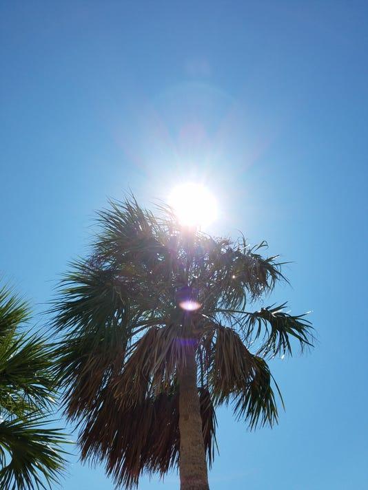 636108356824952333-The-Palm2.jpg
