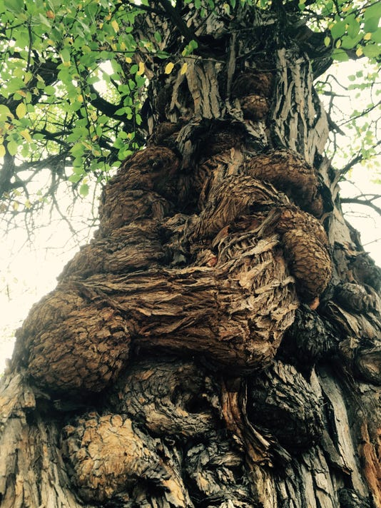 Witches Tree 2