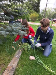 Leighton Malvich (right) and Kaelyn Parker pull weeds in the front yard.