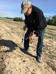 NJ Secretary of Agriculture Doug Fisher cuts asparagus at Grasso Farms in Harrison Township.
