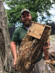 Naples Zoo staff member, Cody Ellis, readies a newly constructed woodpecker nest box for installation. The woodpecker's nest was destroyed during a storm.