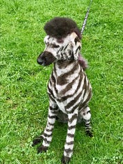 Another view of Daphne and her new zebra groom.