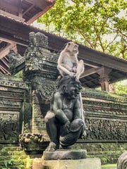 Huempfner snapped this photo of a playful monkey and statue in Bali.