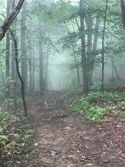 Part of the Appalachian Trail near Skyland.