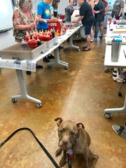 Aladdin, a therapy dog from Haddonfield, is shown at an Austin, Texas animal shelter. Aladdin was named Therapy Dog of the Year by the American Humane Association and is one of seven finalists for the association's Hero Dog Awards.