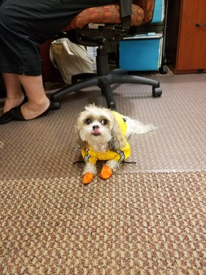 Kaleisi the dog spent a little less than an hour with the clerks at Glen Rock Borough Hall Tuesday, after being found lost by a resident, until her owner came to retrieve her.