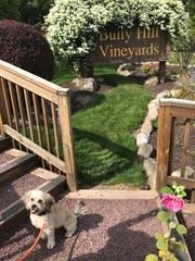 Bully Hill is one of many dog-friendly vineyards in the Finger Lakes.