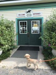Hunt Country Vineyards is one of the dog friendly wineries in the Finger Lakes.