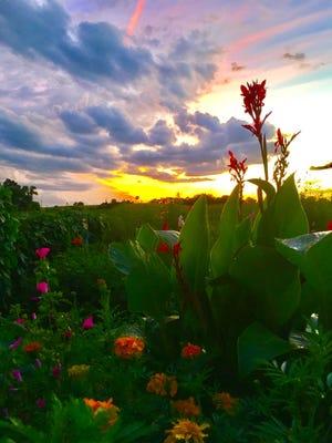 Flowers grow in Kassie Steen's garden in northern Iowa.
