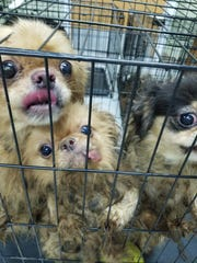 These dogs were rescued from a property in Seaford