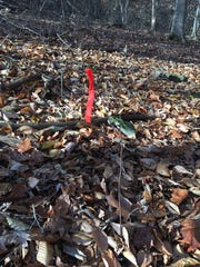 This marks where the buck was when I shot it in Lewisberry.