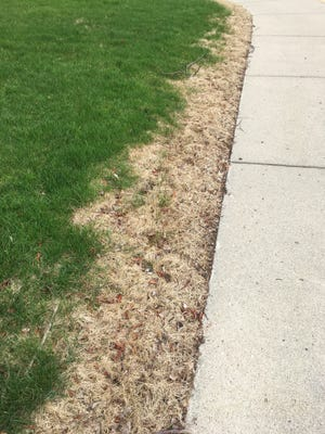 Salt-based ice melt or deicer can damage lawns and plants with runoff or piling up treated snow.