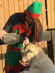 Susan Cartwright feeds a goat at the farm.