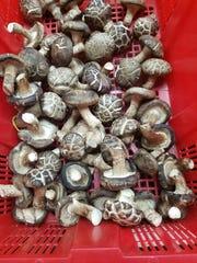 Huāgū shiitake mushroom