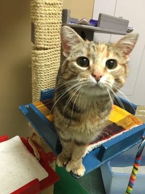 Moondance is waiting at the Oshkosh Area Humane Society for someone to make her their forever roommate.