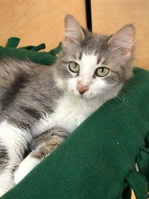 I'm so pretty -- inside and out. I'd love to cuddle with you! Come get me!