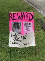 An updated sign about Wally the sheltie who was missing