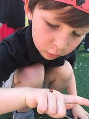Students learned that ladybugs serve as a natural pesticide by feeding on insects that could otherwise harm the health of gardens, trees and shrubs.