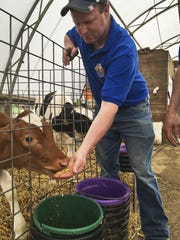 Dan Ripley, of the Ripley Family Farm, feeds a Guernsey calf. Some of his cows naturally produce milk without a protein some blame for indigestion.