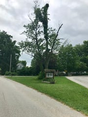 The tree planted nearly 100 years ago to honor Sgt. Harry Bohannon was damaged recently by lightning. The tribute on the edge of Rockfield, a small town in Carroll County, honors Bohannon, who was killed July 1, 1918, in France during World War I.