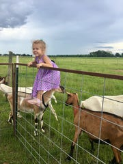 Avery Guidry, 4, scales a fence to meet goats at ICCR