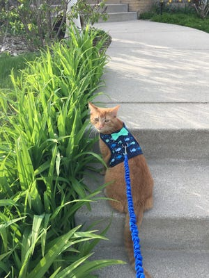 This is reporter Lainey Seyler's cat Bean. He's probably never going to get sick, but if he does, vet Allison Bergin has some tips.