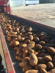 Potatoes are one crop that has bucked the current trend of declining prices.