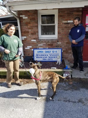 Olivia Urgo, animal care attendant, Chad Cancel, animal control officer, and Jep the pit bull-boxer mix at The Warwick Valley Humane Society are complying with New York State COVID-19 protocols for essential services. Animal shelters, not animal rescues, have been deemed essential.