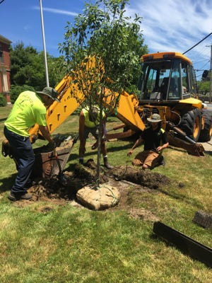 A Capone Landscaping crew plants a tree that was secured through a $20,000 grant from the Foundation Trust. Courtesy photo