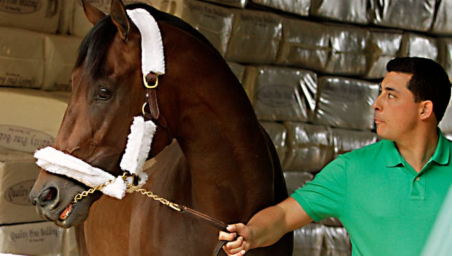 Trainer Simon Callaghan walks Kentucky Derby runner-up Firing Line in the stakes barn at Pimlico Race Course in Baltimore, Wednesday, May 13, 2015. The Preakness Stakes horse race is Saturday, May 16.(AP Photo/Garry Jones)
