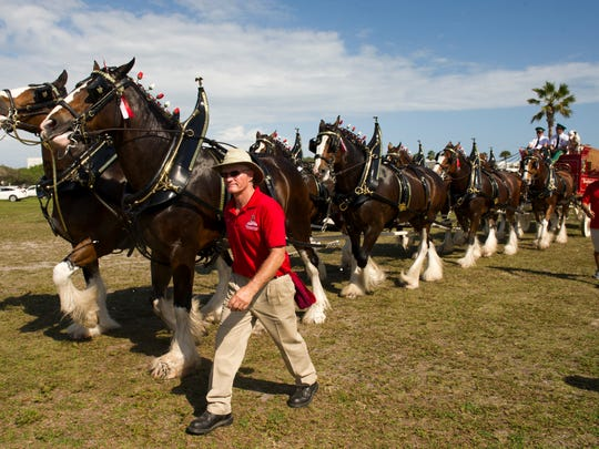 Thousands of residents turned out to see the horses last year at Riverside Park in Vero Beach. This year the team will appear in all three counties Dec. 14,16 and 17.