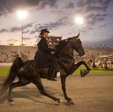 The 78th Tennessee Walking Horse National Celebration Thursday, August 28, 2014 in Shelbyville, Tenn.