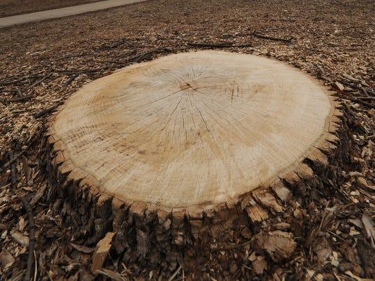ARM Ash Tree Stump