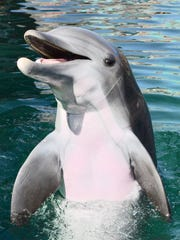 Alia, a 10-year-old bottlenose dolphin, died on May 22 at Dolphinaris Arizona, an aquatics attraction near Scottsdale. The facility said she died of a bacterial infection.